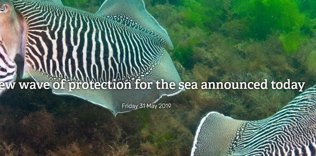 New Devon Marine Conservation Zones