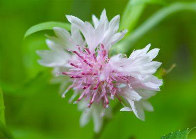 wildflower (2019_03_17 20_07_48 UTC)