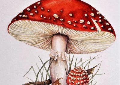 fly-agaric-mushrooms-lizzie-harper
