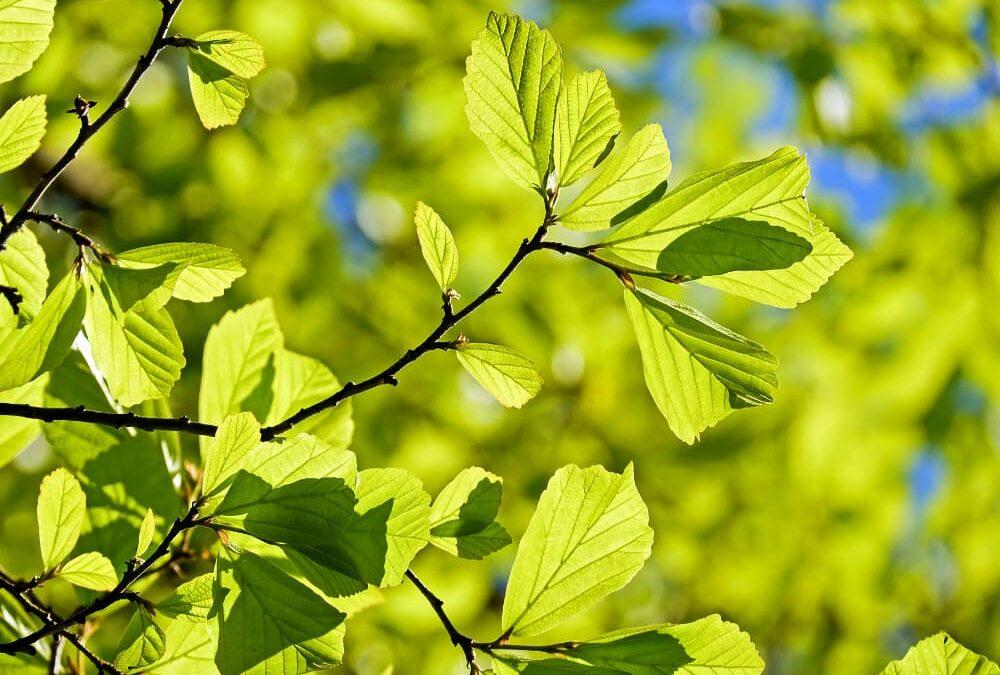 England Tree Strategy – Consultation